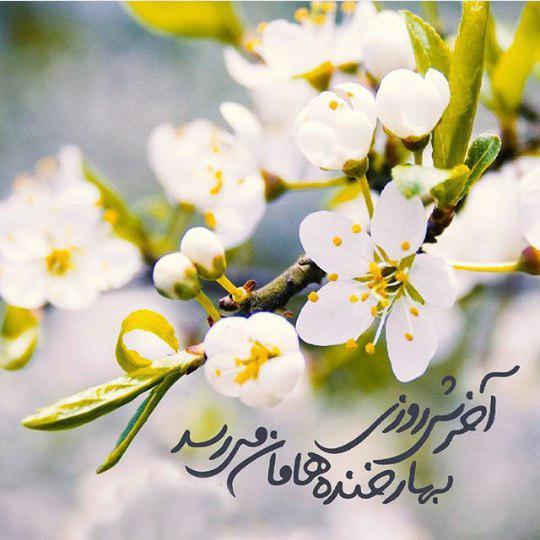 http://kajavehdaran.samenblog.com/uploads/k/kajavehdaran/386948.jpg